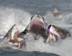 sharkfeeding